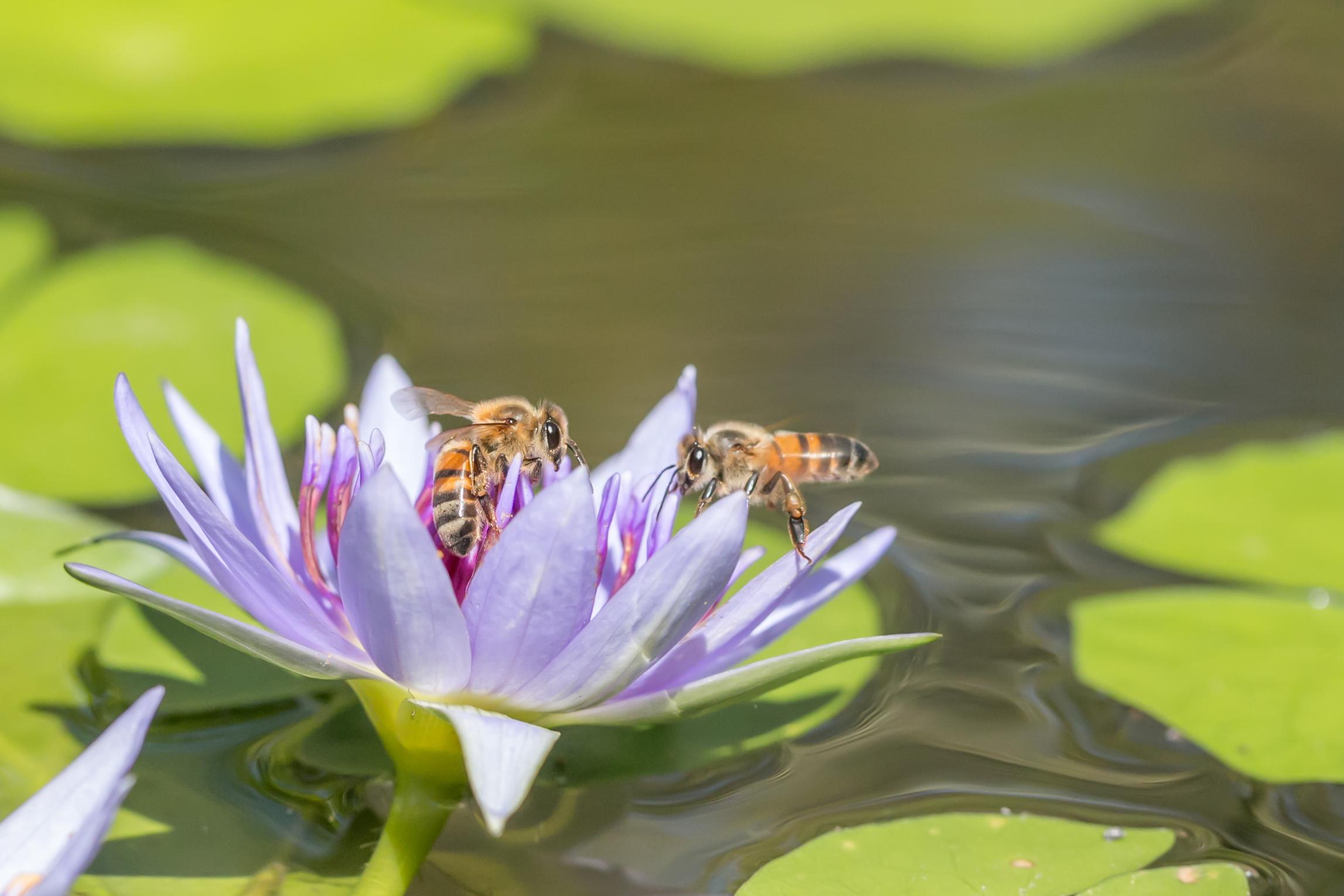 Retrouvailles d'abeilles