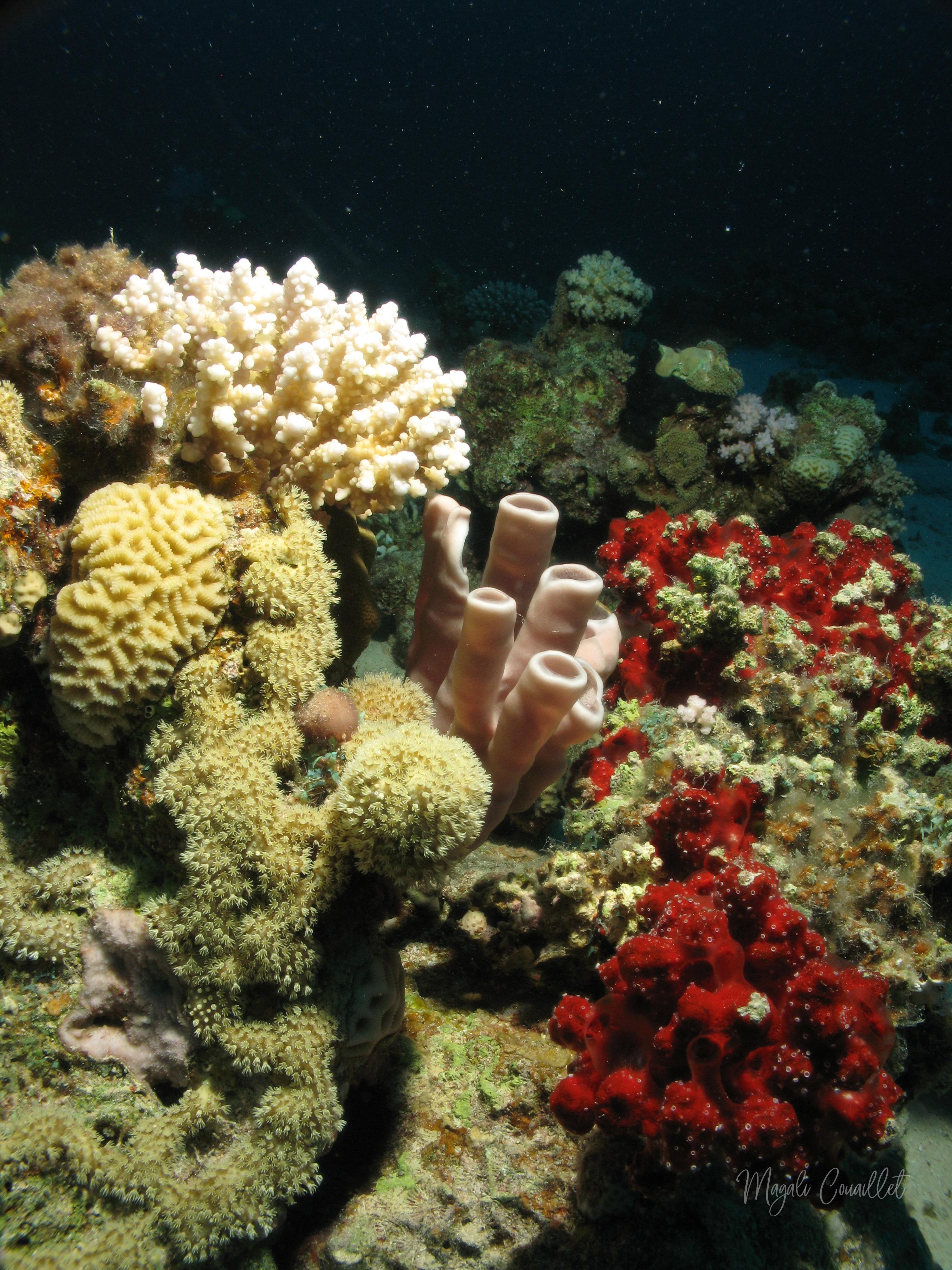 Récif Corallien - Coral reef