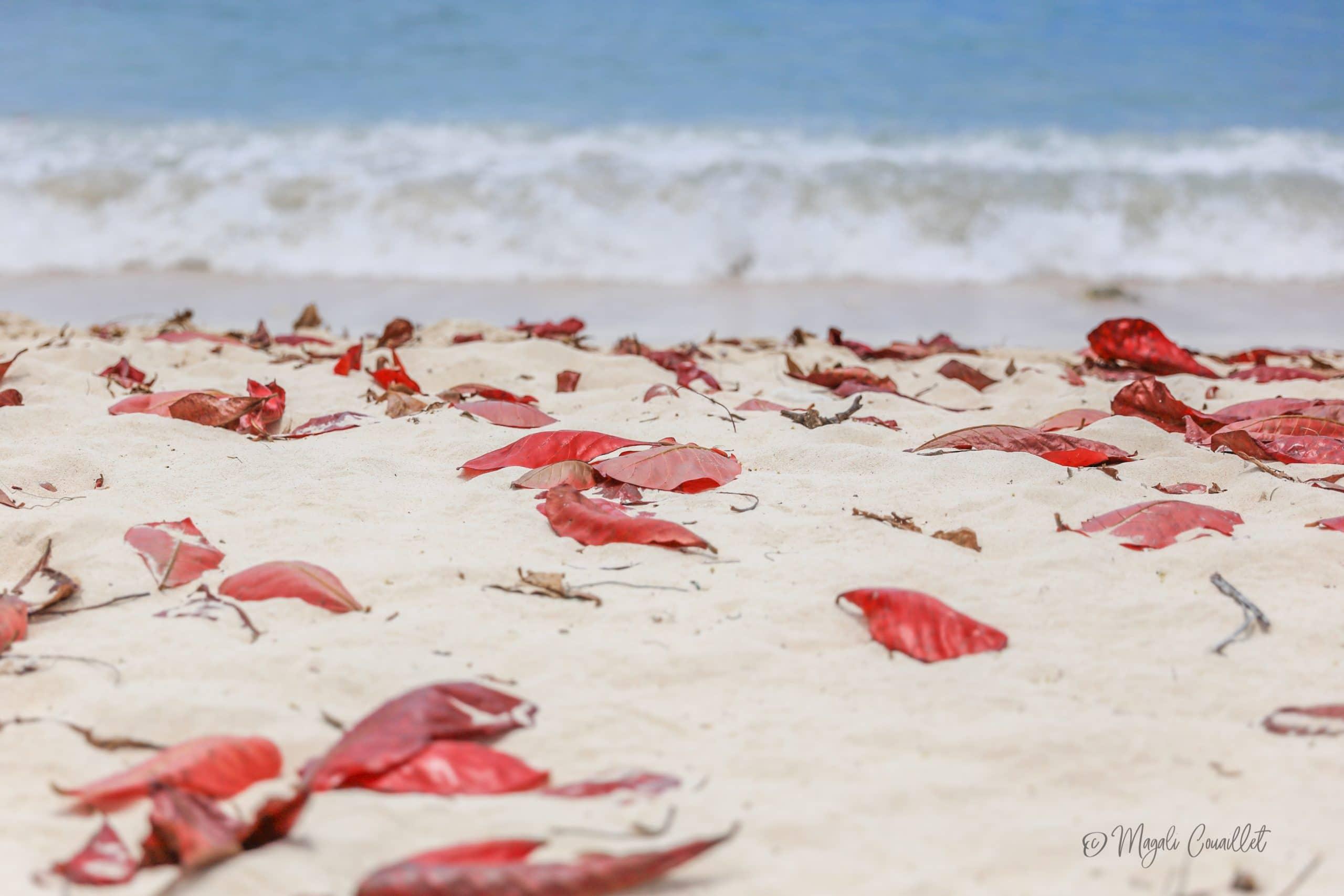 Photo d'une plage à Marie-Galante, Guadeloupe